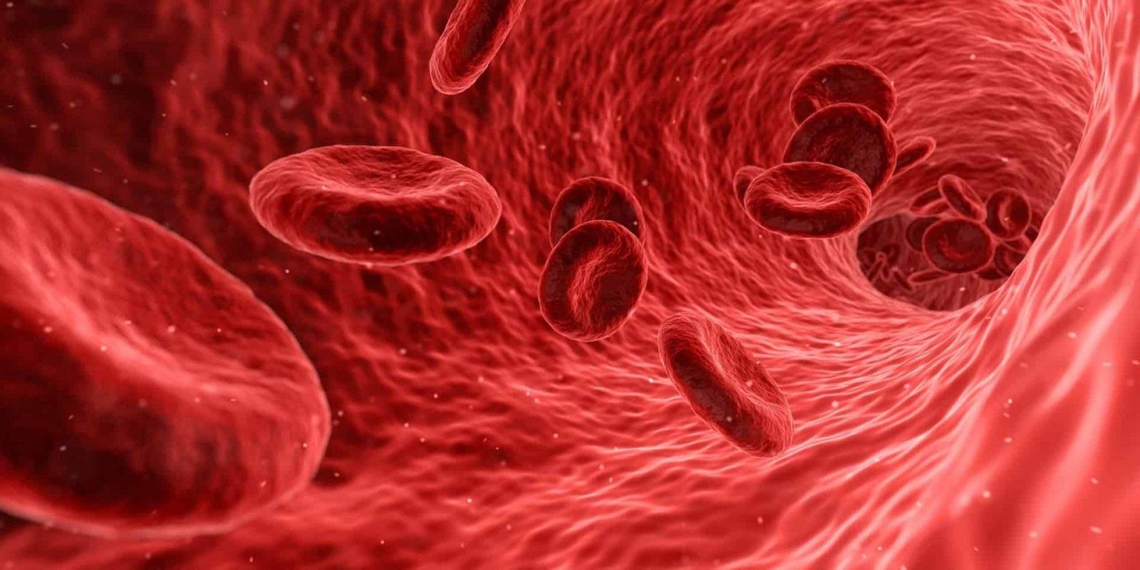 Anemia Simptomat, Diagnostifikimi dhe Parandalimi