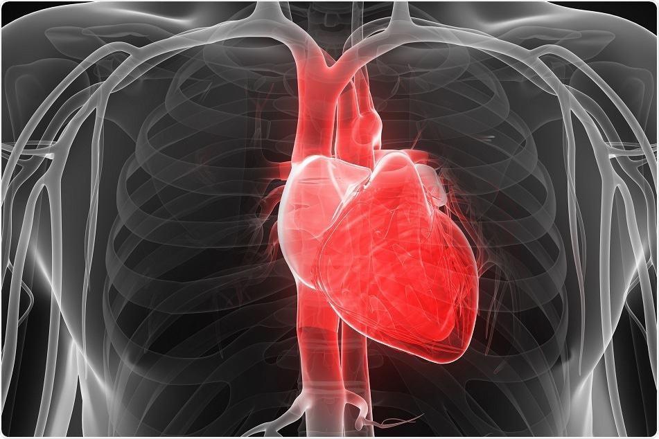 Kardiomiopatia Aritmogjenike e Barkushes së Djathtë (KABD)