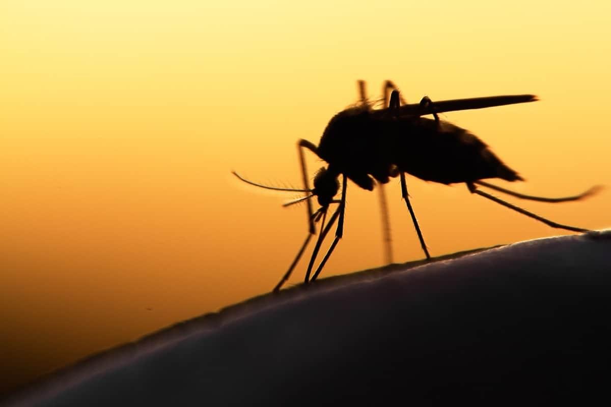 Virusi i Nilit Perëndimor
