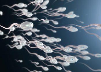 Lëvizshmëria e Spermës