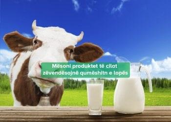 Zëvendësimet Qumështit Lopes
